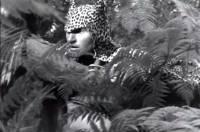 Tarzan et la femme l�opard : image 377962