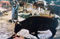 Le Tueur du Montana : image 216178